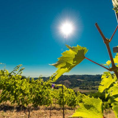 Foto azienda vinicola